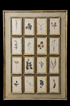 Framed 16 Herbarium Specimen