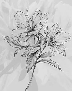 Lily Flower Tattoos, Flower Tattoo Designs, Flower Designs, Tattoo Floral, Flower Sketches, Drawing Sketches, Art Drawings, Flower Outline, Flower Art