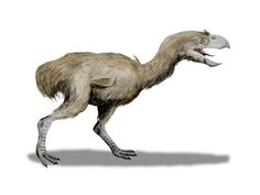 "4.) Phorusrhacidae: People know this creature as the ""terror bird."" It was one of the largest predatory birds that ever lived and could run at speeds up to 40mph."