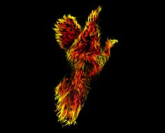 Phoenix I created for client's website and logo