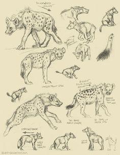 Learning to draw Freya's hyena form Animal Sketches, Animal Drawings, Drawing Sketches, Art Drawings, Art Reference Poses, Drawing Reference, Animal Anatomy, Creature Drawings, Anatomy Drawing