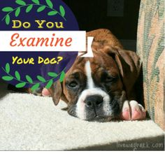 Check out this story and find out how important it is to give your dog examinations at home.