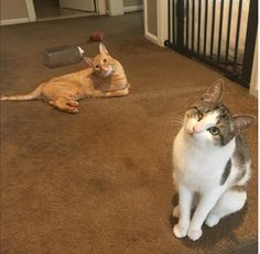 Cat Mom and Dad Dedicate Their Time To Rescuing Handicats