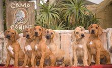 Santa Barbara, CA, Camp Canine