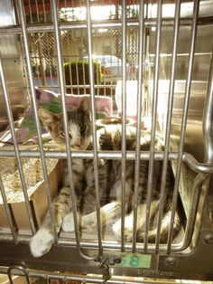 Local Shelters, 6 Month Olds, Praise The Lords, Animal Shelter, Good News, Pet Adoption, The Fosters, Cats And Kittens, Dog Cat