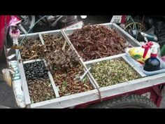 Everything you Need to Know About Eating Insects - YouTube