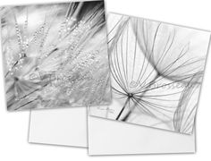 2 grandes cartes carrées de photographies graines  de COULEURS DE NATURE sur DaWanda.com