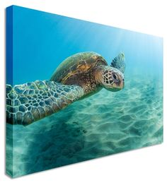 Underwater Turtle by Animal Art Canvas Printers, Canvas Art Cheap Prints by www.canvastown.co.uk
