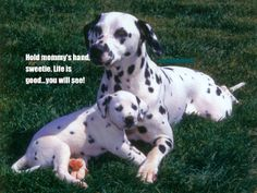 So DogGone Funny!: 14447-Dalmation mom bringing up baby.