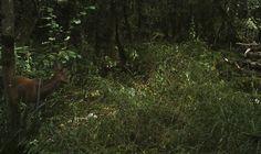Roe doe #wildlife - http://anenglishwood.com/?p=9991