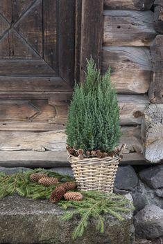 Vintergrønne planter Cactus Plants, Planter Pots, Christmas, Lily, Christmas Deco, Nice Asses, Xmas, Weihnachten, Yule