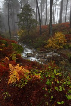 Whispers - Misty Forest, Basque, Spain