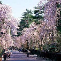 Akita Japan