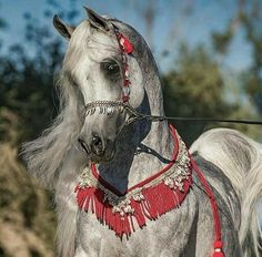 Arabs are the most awesome horses Beautiful Arabian Horses, Most Beautiful Horses, Majestic Horse, Pretty Horses, Arabian Stallions, Arabian Beauty, Black Stallion, Unicorn Horse, Horse Breeds