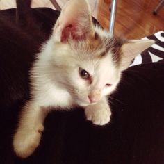 (^_-)  #Cat #Baby #子猫 #黒猫 #白猫