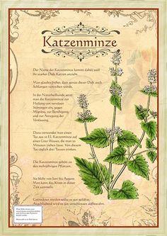 Katzenminze - New Ideas Herb Garden Pallet, Diy Herb Garden, Pallets Garden, Garden Plants, Healing Herbs, Medicinal Herbs, Catnip Plant, Small Herb Gardens, Green Witchcraft