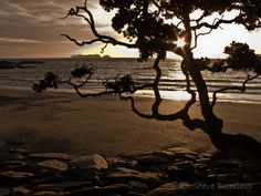Steve Burling-Waitete Bay in Coromandel Photography Reviews, Tree Silhouette, Fake Love, Love Songs, Music Artists, New Zealand, Maine, Sunset, World