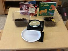 Earth Worms.. Science Area, Plant Science, Preschool Science, Science For Kids, Science Activities, Classroom Organization, Classroom Ideas, Earth Worms, Inquiry Based Learning