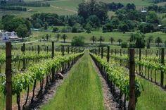 Warwick Wine Estate - Stellenbosch, South Africa
