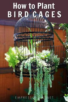 to Make a Birdcage Flower Planter Turn a decorative old bird cage into a wonderful planter for flowers or succulents.Turn a decorative old bird cage into a wonderful planter for flowers or succulents.