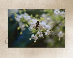Close up of a Bee - Insect Macro Photo - Large Wall Art Decor - Fine Art Photography - Canvas Gallery Wrap - White, Green, Yellow, Nature