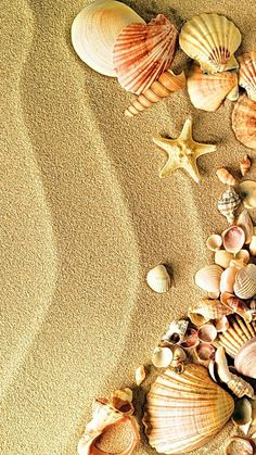 Seashells n sand Ocean Wallpaper, Flower Phone Wallpaper, Summer Wallpaper, Cute Wallpaper Backgrounds, Pretty Wallpapers, Cellphone Wallpaper, Colorful Wallpaper, Cool Wallpaper, Iphone Wallpaper