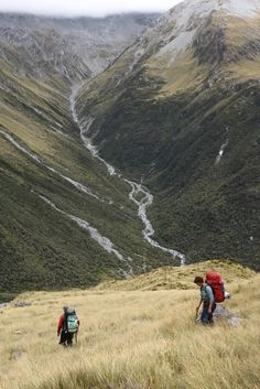 Descending tussock looking out towards Upper Crawford River, Westland, New Zealand.
