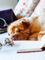 A cute puppy, a sunny room, and an open book. What's better than that?