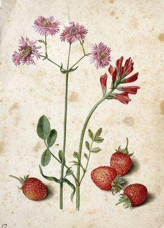Georg Flegel (1566-1638) German - watercolor