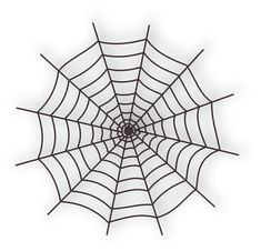 The world is like a web, together everything and everyone is linked