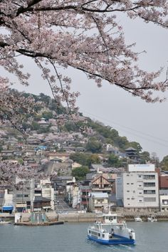Sakura, cherry blossom, which always attracts to everyone, is in best bloom. Onomichi in Hiroshima is famous for Sakura, especially in Senkoji Temple.