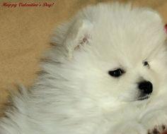 The Lady With The Little Dog: Какво получих за Свети Валентин или сигурни ли сте, че знаете кой е Леонардо ди Каприо?