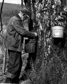 Appalachia has a long history of sugar making. The Cherokees threw hot rocks into hollowed-out logs that were filled with sap. The early colonial settlers, too, quickly learned to make the sweet stuff: Appalachian People, Appalachian Mountains, Vintage Photographs, Vintage Photos, Antique Photos, Photos Du, Old Photos, History Of Sugar, My Old Kentucky Home