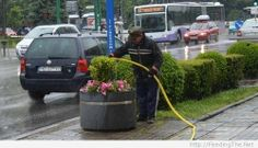 I Don't Ask Questions, I Just Water the Plants - Then I get back on the short yellow bus...