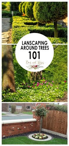 Landscaping Around Trees 101 ~ Bees and Roses
