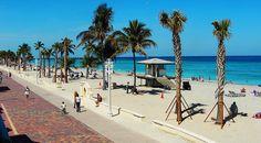 Coconut palms along the Broadwalk at Hollywood Beach, Florida, USA