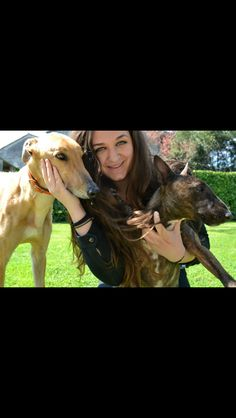 ✌️HENRY✌️sweet greyhound  ✌️DINA✌️adorable bullterrier  THEY ARE INSEPARABLE ❤️