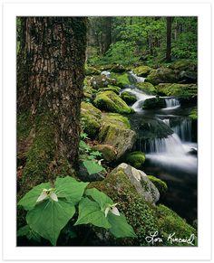 Lori Kincaid Photography: Great Smoky Mountains National Park