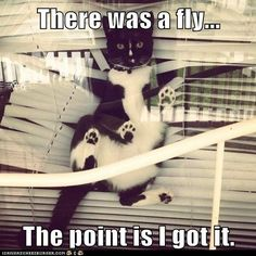 There was a fly. - LOLcats is the best place to find and submit funny cat memes and other silly cat materials to share with the world. We find the funny cats that make you LOL so that you don't have to. Funny Animal Memes, Cute Funny Animals, Funny Cute, Cute Cats, Hilarious, Cat Fun, Funniest Animals, Adorable Kittens, I Love Cats