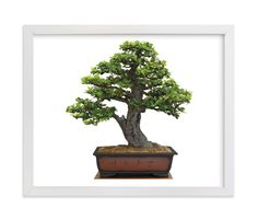 """""""bonsai"""" - Art Print by aticnomar in beautiful frame options and a variety of sizes. Bonsai Art, Art Photography, Wedding Invitations, Art Prints, Plants, Painting, Beautiful, Products, Frame"""