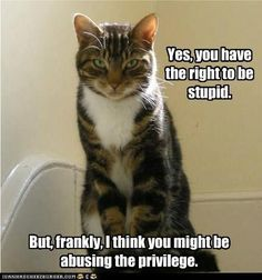 Twitter / voodoo47: First funny cat pic for a ...