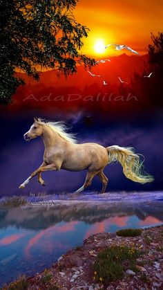 Beautiful Horse Pictures, Most Beautiful Horses, Nature Pictures, Animals Beautiful, Animal Pictures, Cute Animals, Beautiful Nature Wallpaper, Beautiful Paintings, Horse Photography