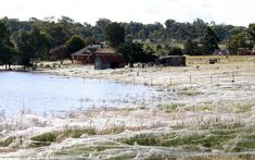 A house is surrounded by spiderwebs next to floodwaters in Wagga Wagga, on March 6, 2012.  From The Atlantic.