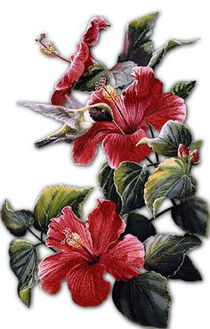 Hibiscus gnral courtigis illustrations flowers rhs prints flores y letras para decoupage pg 13 aprender manualidades es facilisimo ccuart Image collections