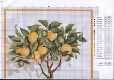 Gallery.ru / Фото #3 - Лимонное дерево - galkin36