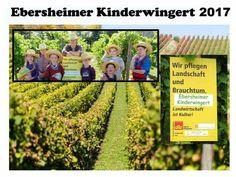 Der Ebersheimer Kinderwingert geht in ein neues Jahr !  http://becker-das-weingut.de/Kinderwingert