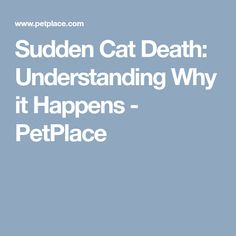 Sudden Cat Death: Understanding Why it Happens - PetPlace Losing A Pet, Pet Health, Cat Lovers, Death, Shit Happens, Tips, Animal, Animals, Animaux