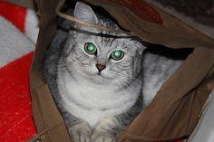 Daniela999 / Mačka Cats, Handmade, Animals, Gatos, Hand Made, Animales, Animaux, Animal, Cat