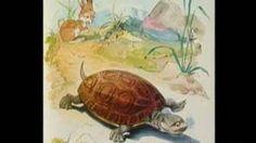 haas en de schildpad
