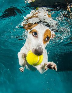 ...not without my ball !